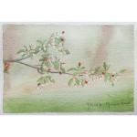 4x6, Still Life, Berkshire, Watercolor